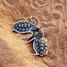 How adorable.. Baby turtles!