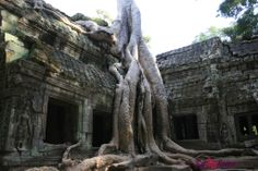 Ta Prohm, il tempio inghiottito dalla foresta | www.romyspace.it