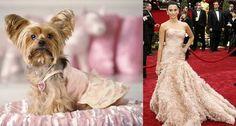 120 Ideas De Mi Mascota Mascotas Perros Ropa Para Perros