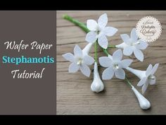 Step by step tutorial on how to make a Wafer Paper Stephanotis flower. Materials Links: Icing Images Wafer Paper http://www.icingimages.com/wafer-paper Marth...