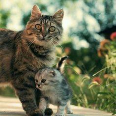 猫の親子 19|ねこLatte+