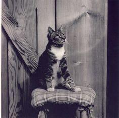 Edward Weston, cat in photography Edward Weston, Vintage Pictures, Old Pictures, 4 Photos, Vintage Photography, Art Photography, Henry Westons, Photo Chat, Vintage Dog