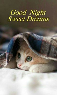 Good Night Sweet Dreams For Her Beautiful + Good Night Beautiful For Her Good Night Cat, Good Night Sister, Good Night I Love You, Good Night Prayer, Good Night Blessings, Good Night Sweet Dreams, Funny Good Night Images, Beautiful Good Night Quotes, Good Night Love Messages