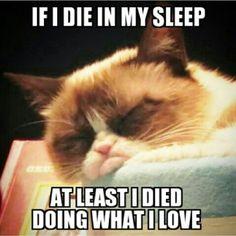 Sleepy grumpy cat- I do what I love, and I really love to sleep.
