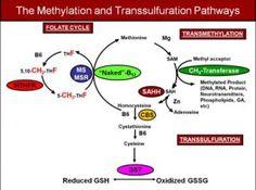 Methylation and Transsulfuration Pathways
