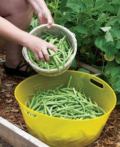 Summer Harvesting Guide—how to know when to harvest different crops, plus storage tips
