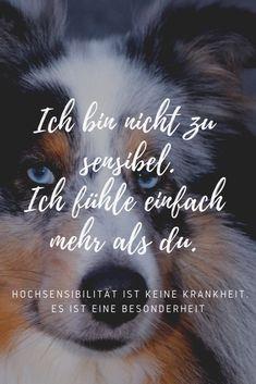 Coming Soon: E-Book Hochsensible Mensch-Hund-Teams MenschTierPsychologie