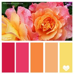 I feel like I say this all the time, but it's so true I'll say it again… Nature is the best place for color inspiration! Today we dive into flowers. Warm Colour Palette, Color Palate, Color Blending, Warm Colors, Colour Palettes, Colour Schemes, Color Patterns, Color Combos, Design Seeds