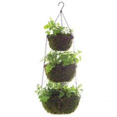 msl-good-things-hanging-herbs-021-mld109975.jpg