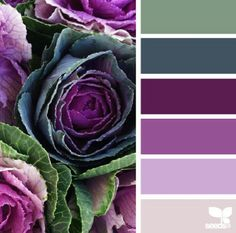 Gorgeous palette for freeform - market hues - design seeds Purple Color Palettes, Colour Pallette, Color Palate, Color Combos, Purple Color Schemes, Purple Palette, Wall Colour Combination, Beautiful Color Combinations, Decoration Palette