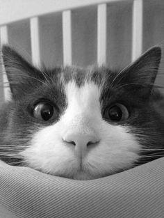 Katzen sprechen mit den Augen.  Anja Meulenbeldt