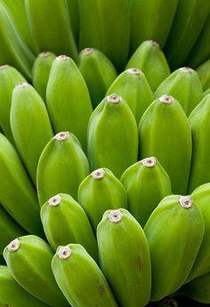 Green Bananas, Kauai, Hawaii