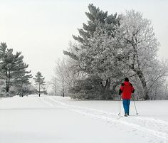 Cross-country skiing near the Ottawa River Parkway, Ottawa, Ontario.