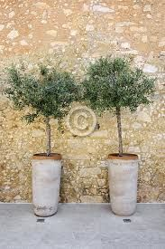olive trees in pots Patio Trees, Potted Trees, Outdoor Plants, Outdoor Gardens, Pot Jardin, Rooftop Garden, Olive Tree, Garden Styles, Garden Inspiration
