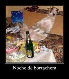 Fotos de humor: borrachera. Colección de preciosas fotos de humor para utilizar en sitios web, facebook, Twitter, Google plus