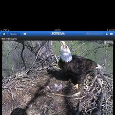 Welcome little eaglets!