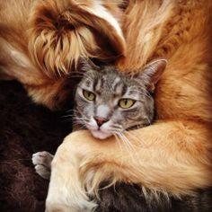 C'est clair, ce Chat fait preuve de patience .... Il est tombé sur un copain Chien légèrement envahissant !