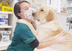 El 100% de los perros puede (y debería) estar feliz y relajado en el veterinario: pistas prácticas para lograrlo | SrPerro, la guía para animales urbanos. Look At Me, Labrador Retriever, Dogs, Happy, Urban, Animales, Labrador Retrievers, Pet Dogs, Doggies