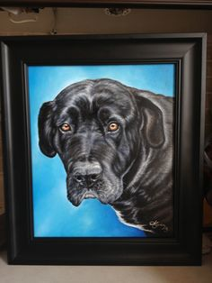 Portrait of Sky, mixed breed