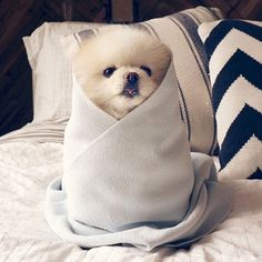 The cutest little puppy burrito!