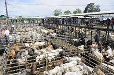 Resultado de imagen para corrales de ganado