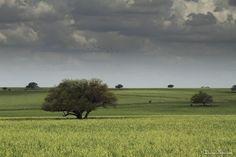La Pampa, Argentina! #postalesdecampo