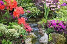 Image result for beautiful plant life