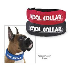 Kool Collar - Helps keep your pups cool outside in the heat