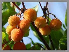 No debemos olvidar los recursos comestibles que nos aporta la madre naturaleza, respétala para poder seguir disfrutando de sus frutos placenteros.