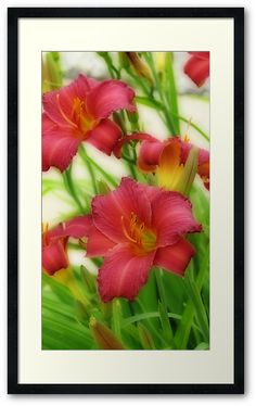 """""""Day Lilies"""" by #Kay Novy #framed #lilies #lily #flowers #floral #nature #vibrant  http://www.redbubble.com/people/kkphoto1/works/12408397-day-lilies"""