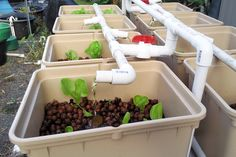 Aquaculture and hydroponics...this is one idea using bins and water. You can also use wooden tears. I will post that next.