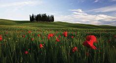 San Gimignano, Siena, and Chianti Full Day Tour