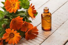 Natural Remedies For Varicose Veins CALENDULA OIL can be applied topically to an incredibly wide range of skin problems where healing, calming and soothing are needed. It is particularly good for thread veins, varicose veins, Hyssop Essential Oil, Geranium Essential Oil, Tea Tree Essential Oil, Varicose Vein Remedy, Varicose Veins, Oils For Scars, Oils For Skin, Benefits Of Vitamin E, Cold Pressed Oil