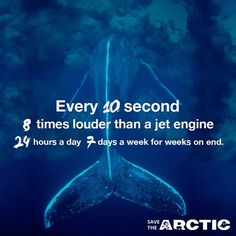 Shell and its partners are sponsoring destructive seismic blasting in the Arctic. These blasts can disrupt and even severely harm whales and other creatures who live in the surrounding waters. We need to stop seismic blasting and #SavetheArctic! #ShellNo #PeopleVsShell #Greenpeace #whales #Arctic #Nature