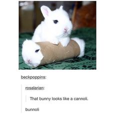 bunny, lol, and cute image