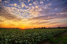 Beautiful Indiana sunset
