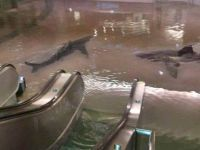 Fear not, there are no sharks swimming in your mall