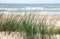 Fototapete Dänemark - Strand in Norddänemark