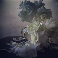 Roses by nick knight  19th July 2015 Showstudio.com