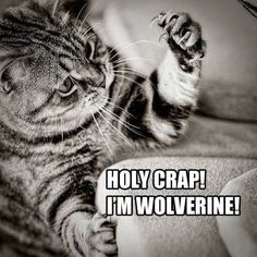 You may not be able to bring home Hugh Jackman, but you *could* add Mew Jackman to your family! Visit animalfoundation.com to adopt your very own Wolverine impersonator.