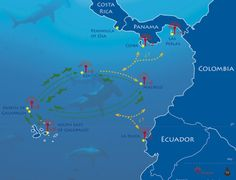 Hammerhead shark movements from tags off Cocos Island, Galapagos and Malpelo- this corridor makes these sharks highly vulnerable to shark finning  sharkstewards