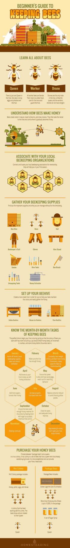 Beginners Guide To Keeping Bees