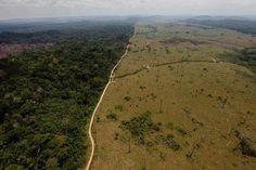 """COP21: Panamá propone la creación de un """"Centro internacional para el manejo de los bosques"""":"""
