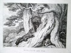 2. Howitt, Samuel 1810 Four original engravings/etchings: Dog, Cock and Fox; Hunted Beaver; The Eagle, & Assembly of Animals; Sheep and Hunted Wolf book