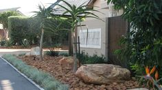 Rock Garden with Tree Aloes, simple but effective