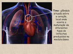 """No meio do peito, bem atrás do osso onde a gente toca quando diz """"eu"""", fica uma pequena glândula chamada timo.Seu nome em grego, thýmos, significa energia vital. O Timo continua sendo u…"""