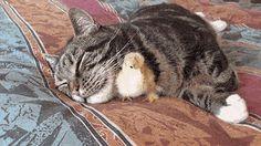 Unlikely furry friends