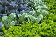 "Plantarea mixtă: alegem cei mai buni ""vecini"" pentru plante - Fasingur Small Farm, Garden Ideas, Gardening, Vegetables, Lawn And Garden, Vegetable Recipes, Landscaping Ideas, Backyard Ideas, Veggies"