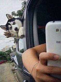 42 Most Epic Dog Photobombs On Pinterest - Dogtime