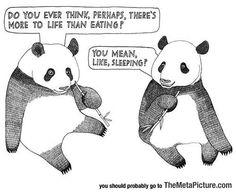 The Life Of A Panda